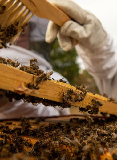 Beekeeping Fiji