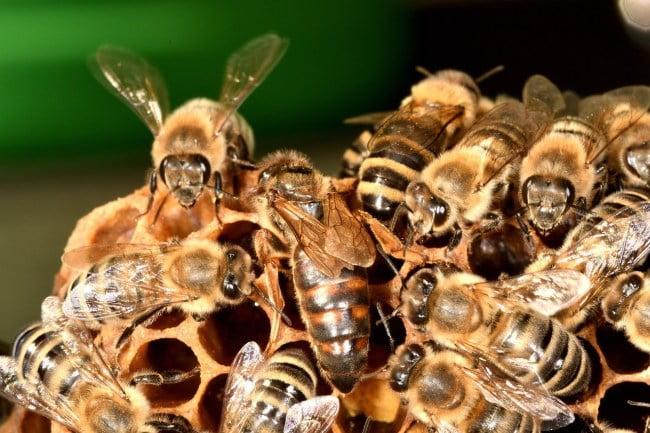 bees-QUEEN_1280