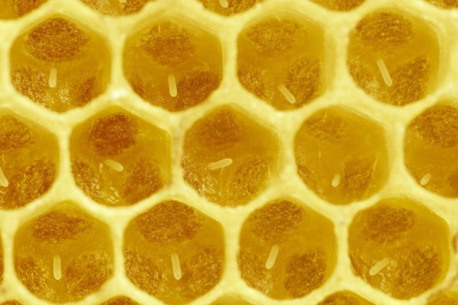 When first laid, eggs stand vertically in the center of a brood cell