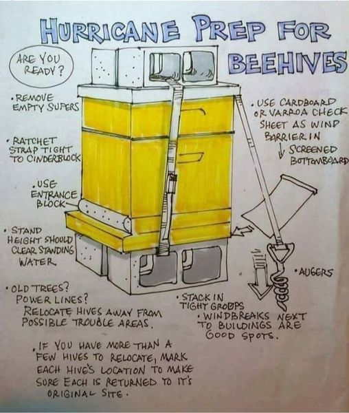 18 ways to keep bees safe during and following a cyclone in Fiji