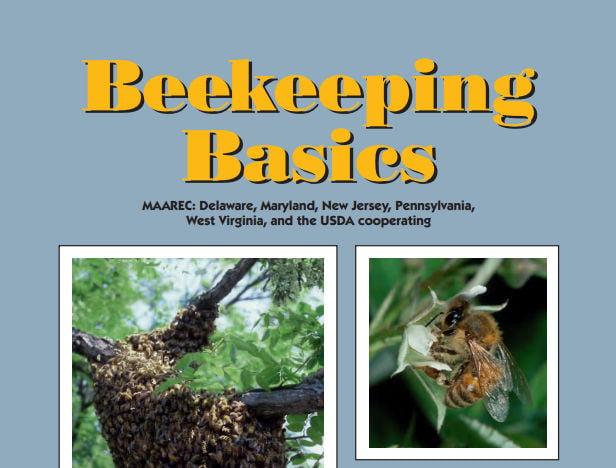 Bee-Basics