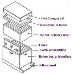 A typical beehive consists of two   boxes containing frames with wax  foundation, a cover, inner cover, and  bottom board.