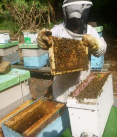 The bee colony in a new hive typically consists of only 3-5 frames of brood and  bees